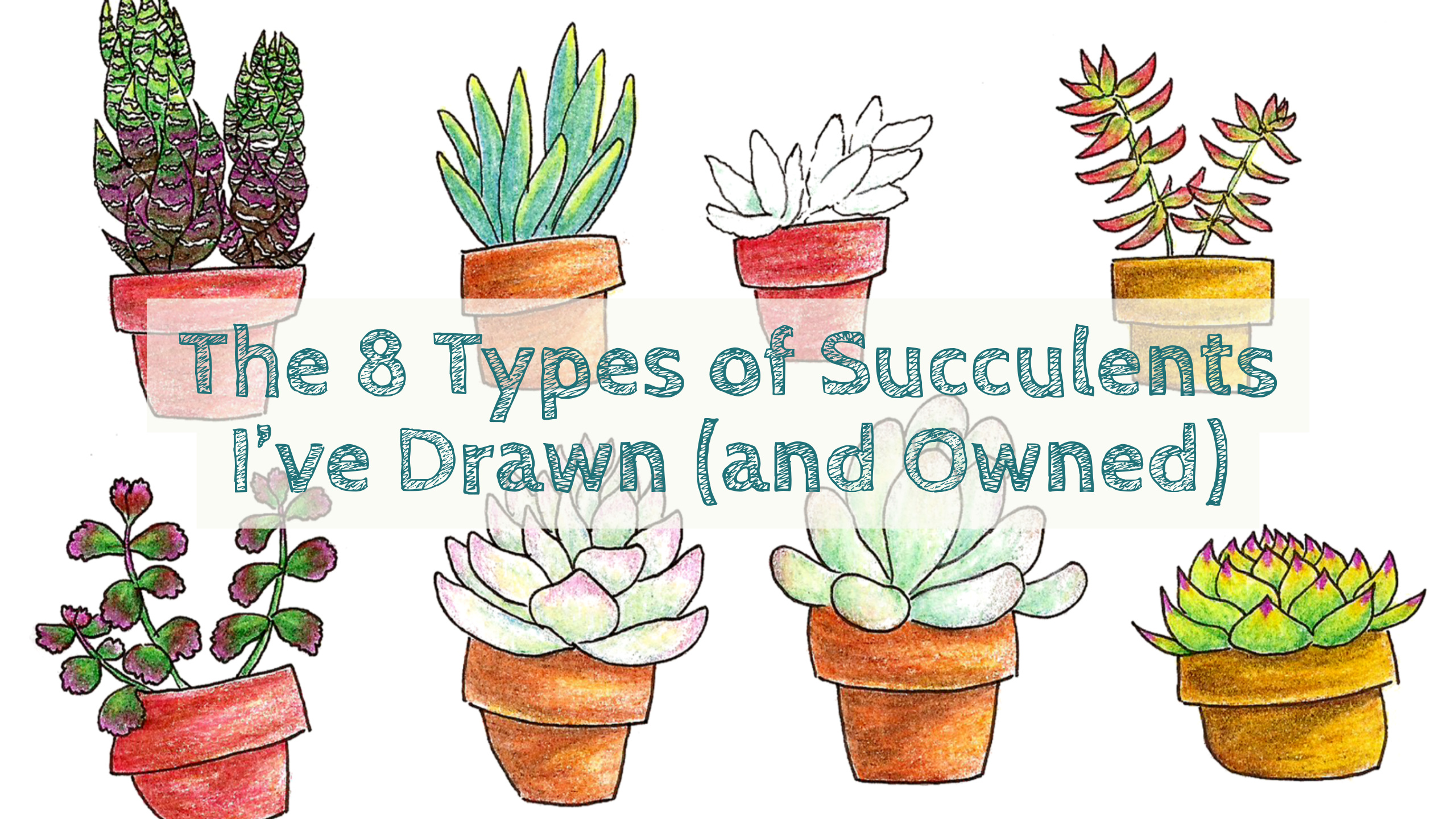 "Succs in Pots Title Image with succulent drawings in the background. Title text reads ""The 8 Types of Succulents I've Drawn (and Owned)"""